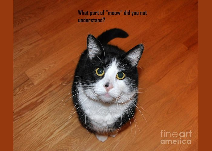 Animals Greeting Card featuring the photograph More Words From Teddy The Ninja Cat by Reb Frost