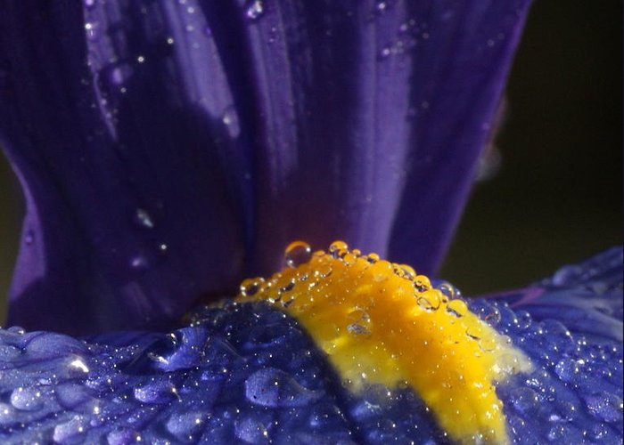 Flowers Greeting Card featuring the photograph Morning Dew by Tim Riley