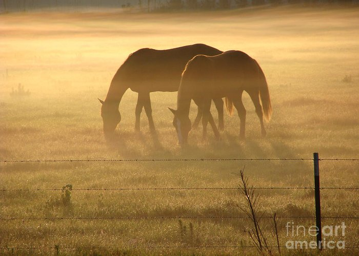 Horse Greeting Card featuring the photograph Morning Grazing by Jack Norton