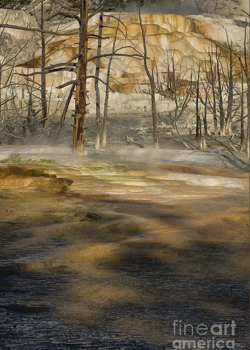 Yellowstone Greeting Card featuring the photograph Morning Light On Mammoth Terrace by Sandra Bronstein