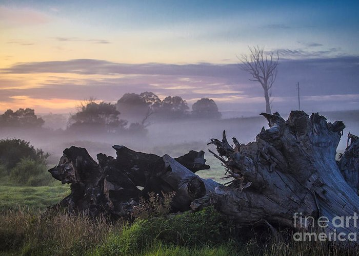 Morning Greeting Card featuring the photograph Morning mist by Sheila Smart Fine Art Photography