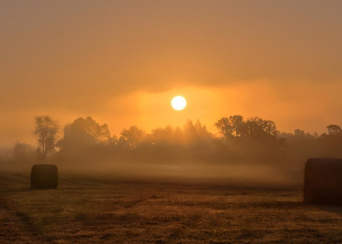 Landscape Greeting Card featuring the photograph Morning On The Farm by Ron McGinnis