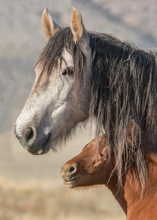 Horse Greeting Card featuring the photograph Morning Sun by Kent Keller