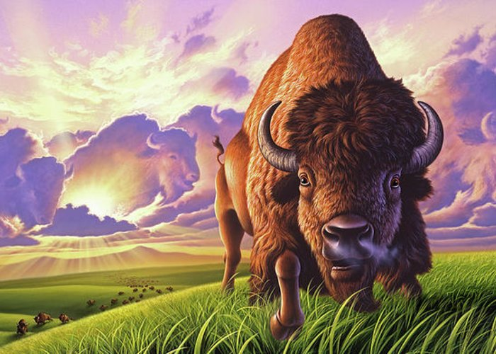 Buffalo Greeting Card featuring the painting Morning Thunder by Jerry LoFaro