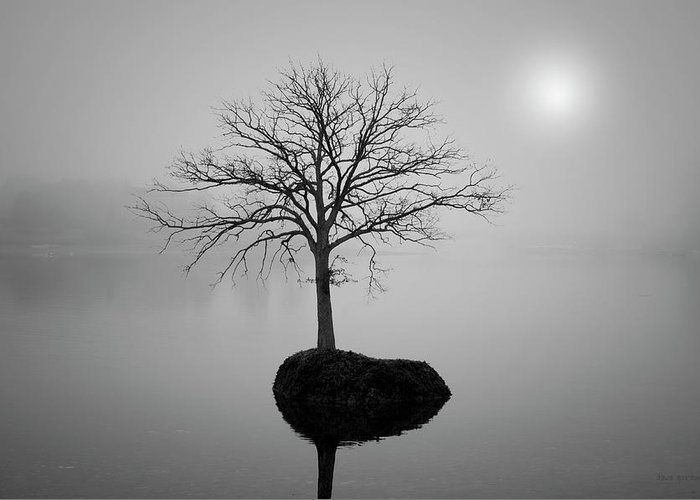 Tree Greeting Card featuring the photograph Morning Tranquility by Dave Gordon
