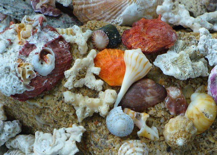 Shells Greeting Card featuring the photograph Morning Treasures by Peggy King