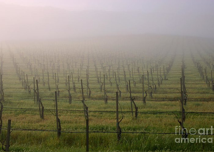 Landscape Greeting Card featuring the photograph Morning Vineyard by Balanced Art