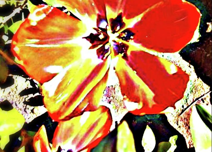 Orange Greeting Card featuring the photograph Moro Bright by Melissa KarVal