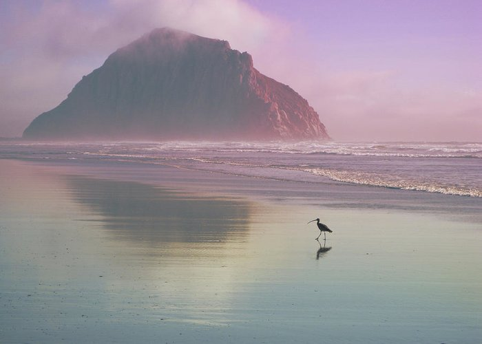 Morro Greeting Card featuring the photograph Morro Rock by Kevin Bergen