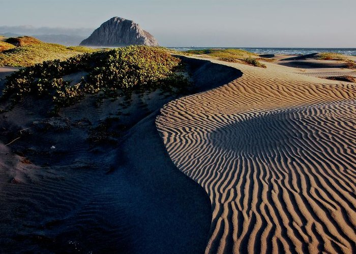 Nature Greeting Card featuring the photograph Morro Strand State Beach, California by Zayne Diamond Photographic