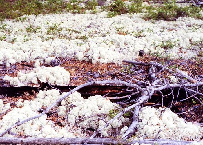 Boreal Foest Greeting Card featuring the digital art Moss And Dead Branches 2 Ae2 by Lyle Crump