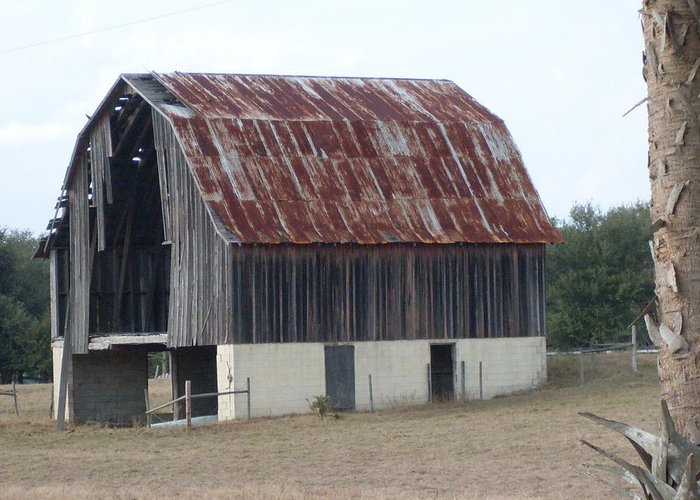 Barn Florida Photograph Greeting Card featuring the photograph Moss Bluff Barn by Warren Thompson