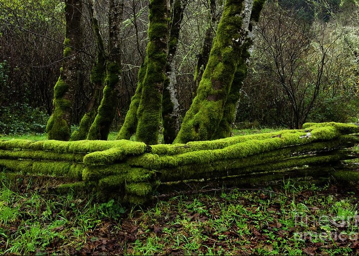 Moss Greeting Card featuring the photograph Mossy Fence 3 by Bob Christopher
