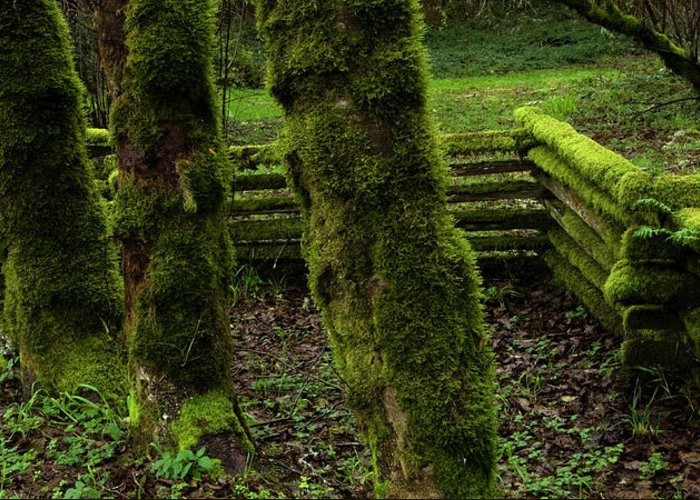 Moss Greeting Card featuring the photograph Mossy Fence by Bob Christopher