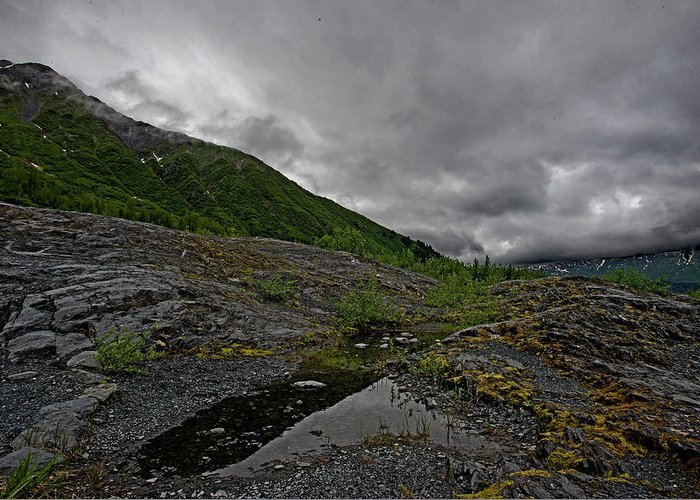 Alaska Greeting Card featuring the photograph Mossy View by Eric Nelson