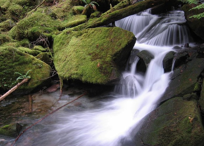 Landscape Greeting Card featuring the photograph Mossy Waterfall Landscape by BC Scenery
