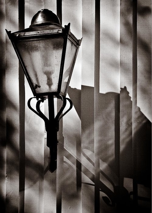 Moth Greeting Card featuring the photograph Moth And Lamp by Dave Bowman