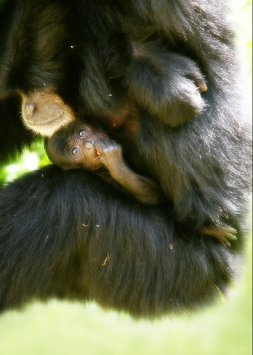 Monkey Greeting Card featuring the photograph Mother And Baby Monkey by Lesley Smitheringale