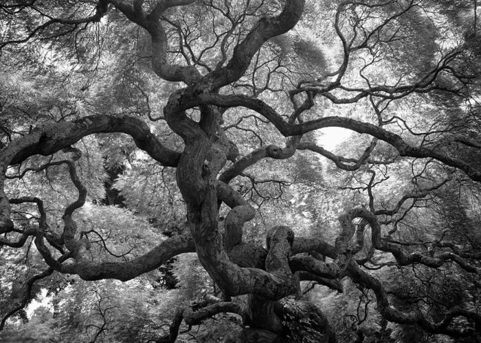 Tree Greeting Card featuring the photograph Motivations by Mitch Cat