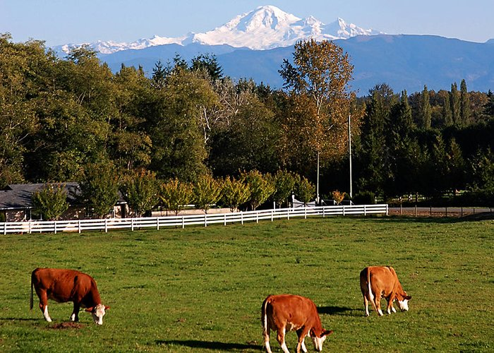 Mt. Baker Greeting Card featuring the photograph Mount Baker From Langley Bc by Marion McCristall