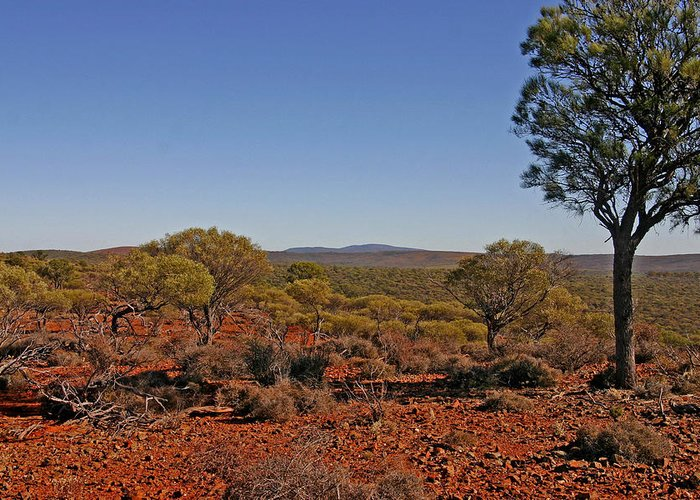 View To Mt Singleton From Homestead Ridge Trail. This Area Of Western Australia Is Rich In Iron Ore Greeting Card featuring the photograph Mount Gibson Station Wa by Tony Brown