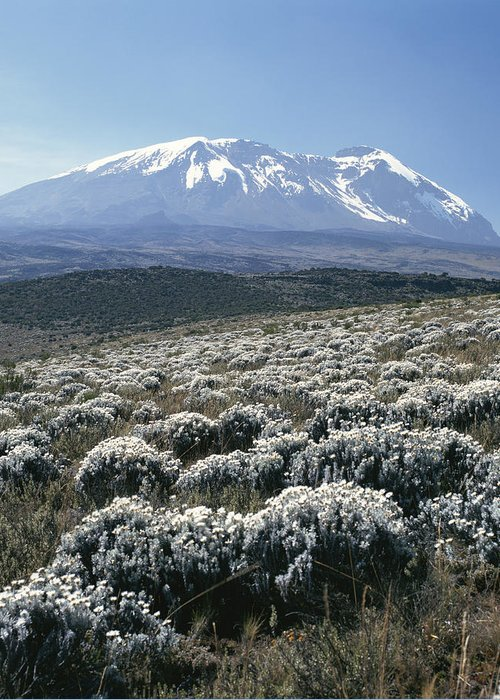 Africa Greeting Card featuring the photograph Mount Kilimanjaro, The Breach Wall by David Pluth
