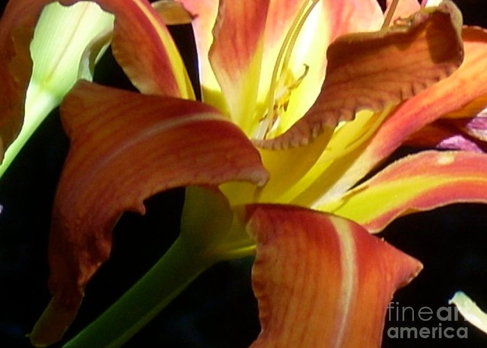 Single Flower Greeting Card featuring the photograph Mountain Day Lily by Beebe Barksdale-Bruner