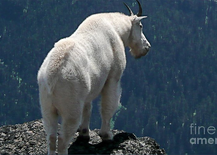 Photography Greeting Card featuring the photograph Mountain Goat 2 by Sean Griffin