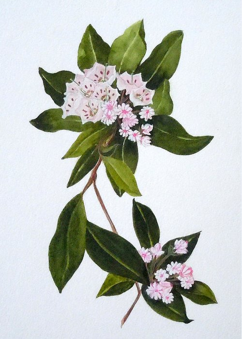 Mountain Laurel Greeting Card featuring the painting Mountain Laurel by Jean Blackmer