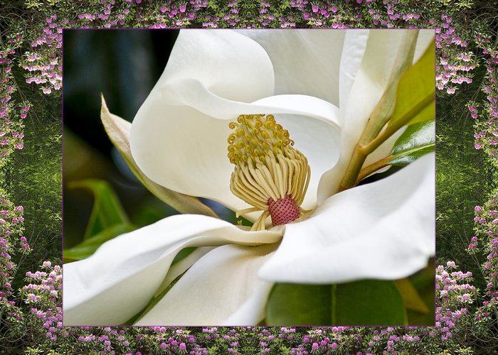 Nature Photos Greeting Card featuring the photograph Mountain Magnolia by Bell And Todd