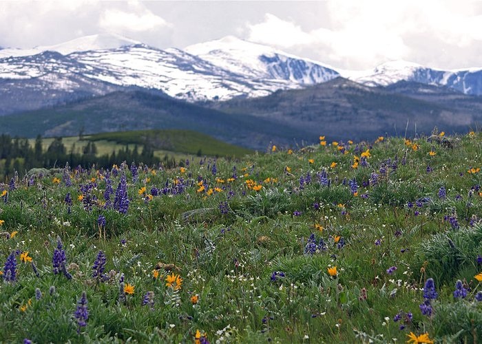 Landscape Greeting Card featuring the photograph Mountain Wildfowers by MH Ramona Swift