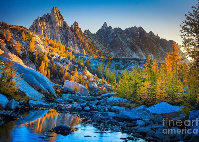Larch Greeting Cards