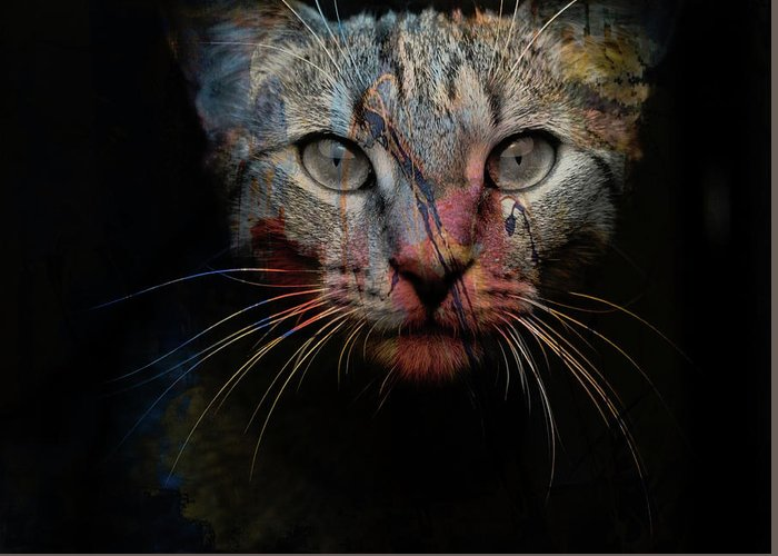 Cat Greeting Card featuring the photograph Mr Bo by Paul Lovering