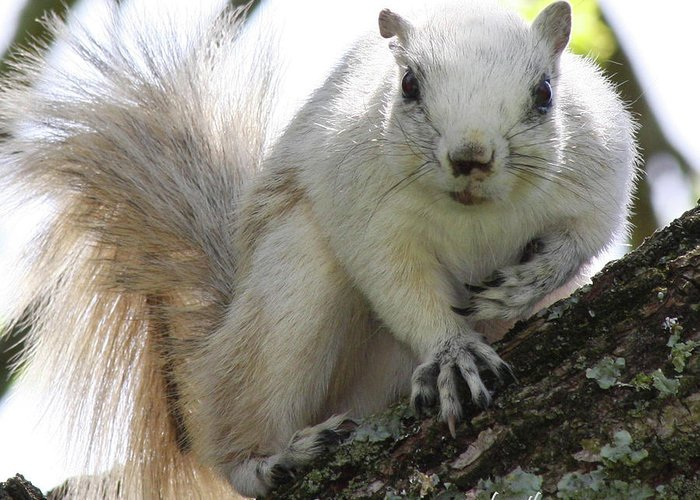 Squirrel Greeting Card featuring the photograph Mr. Inquisitive II by Betsy Knapp