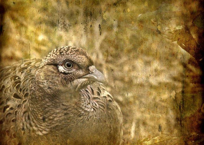 Pheasant Greeting Card featuring the photograph Mrs Pheasant by Angel Ciesniarska