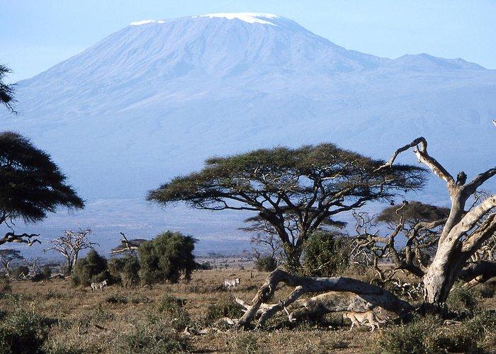 Worsley Greeting Card featuring the photograph Mt.kilimanjaro by Wade Worsley