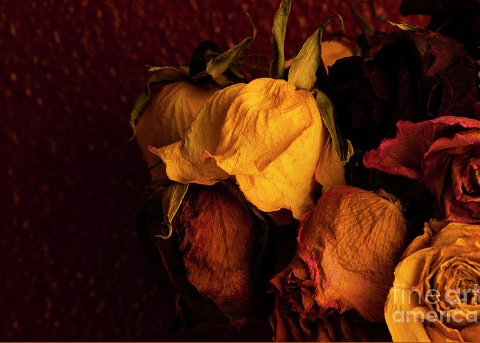 Abundance Greeting Card featuring the photograph Multicolored Roses Wilting by Jim Corwin
