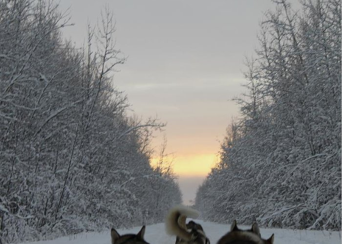 Husky Greeting Card featuring the photograph Mushing Into The Sunset by Tanja Hymel