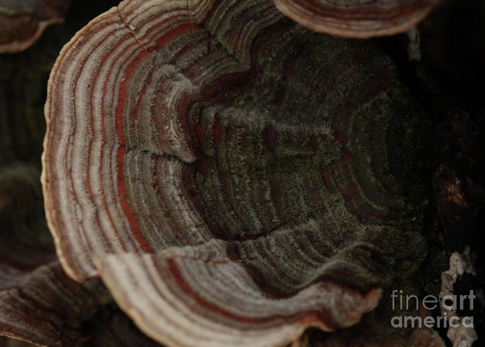 Mushroom Photography Greeting Card featuring the photograph Mushroom Shells by Kim Henderson