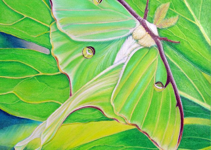 Luna Moth Greeting Card featuring the painting Must Be Dreaming by Amy Tyler