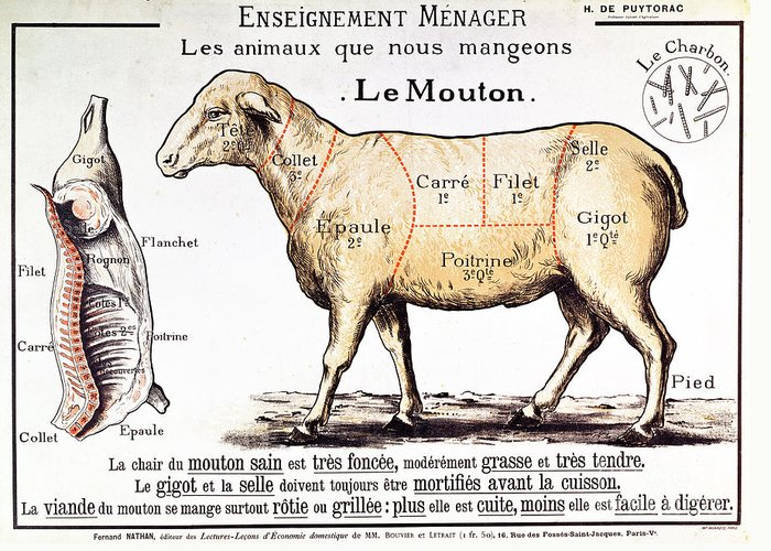 Le Mouton; Lamb; Sheep; Joint; Cut; Meat; Food; Animal; Mutton; Butchering Greeting Card featuring the drawing Mutton by French School