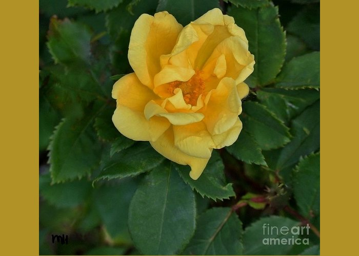 Photo Greeting Card featuring the photograph My First Yellow Rose by Marsha Heiken
