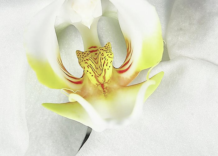 Orchid Greeting Card featuring the photograph My Inner Orchid by David Hayden