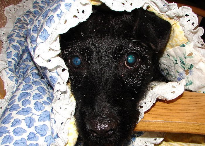 Black Dog Greeting Card featuring the photograph My Little Darlin' by Belinda Consten