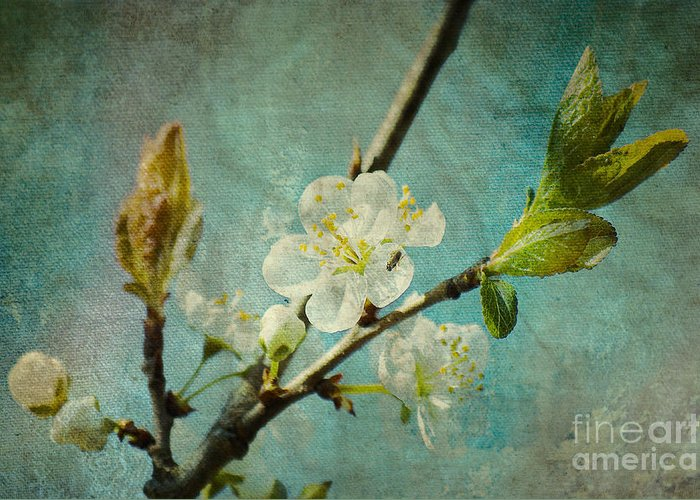 Spring Greeting Card featuring the photograph My Springtime by Angela Doelling AD DESIGN Photo and PhotoArt