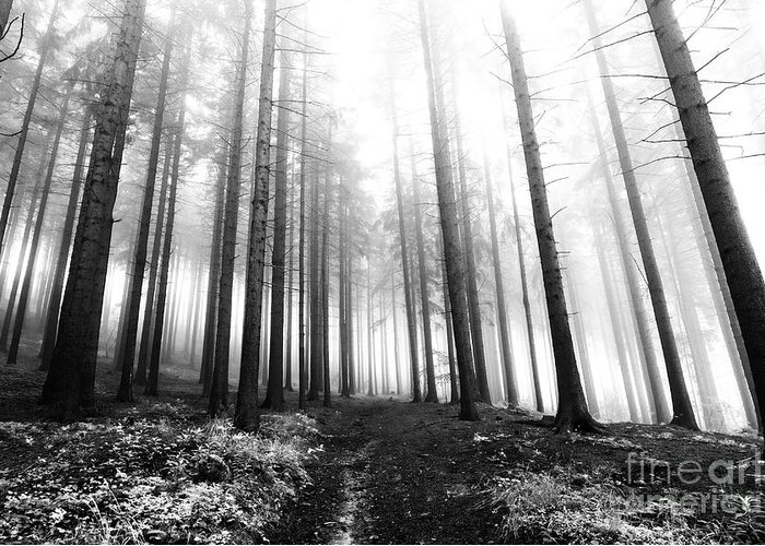 Bleak Greeting Card featuring the photograph Mysterious Forest by Michal Boubin
