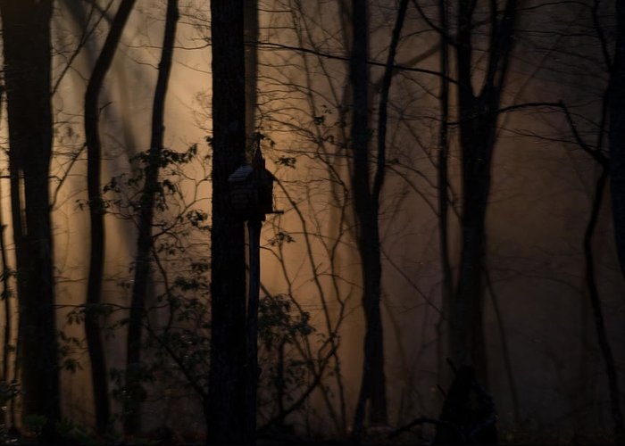 Fog Greeting Card featuring the photograph Mystical Woods by Douglas Barnett
