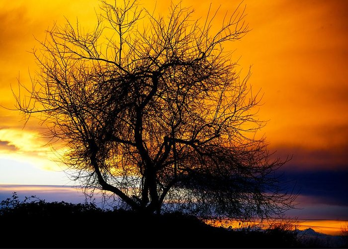 Tree Greeting Card featuring the photograph Naked Tree by Paul Kloschinsky