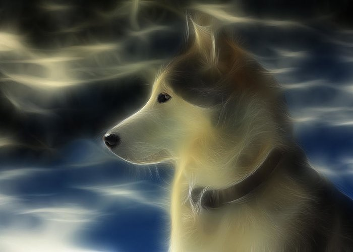 Dog Greeting Card featuring the photograph Nanuk Husky Fractal by Marjorie Imbeau