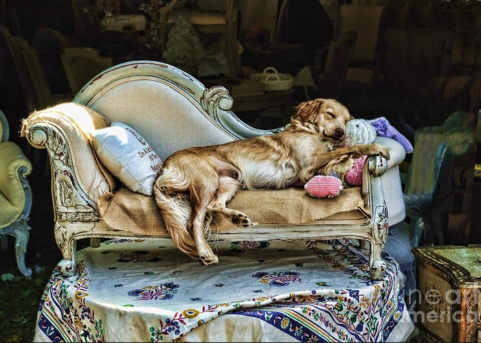 Dog Greeting Card featuring the photograph Nap Time by Edward Sobuta